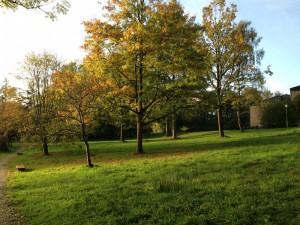 Preetz im Herbst (Bild: TK).
